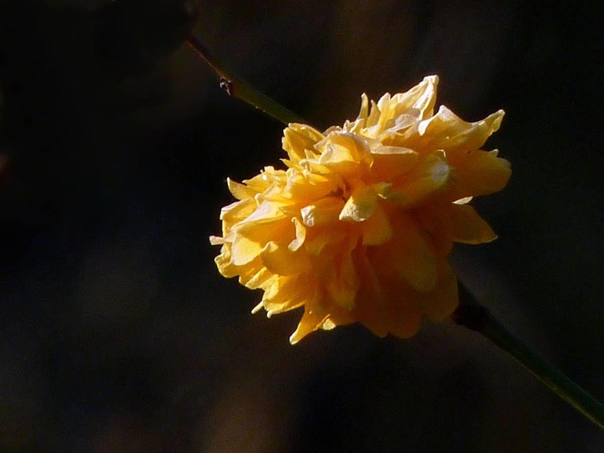 Au jardin de Marithé semaine 03/2012