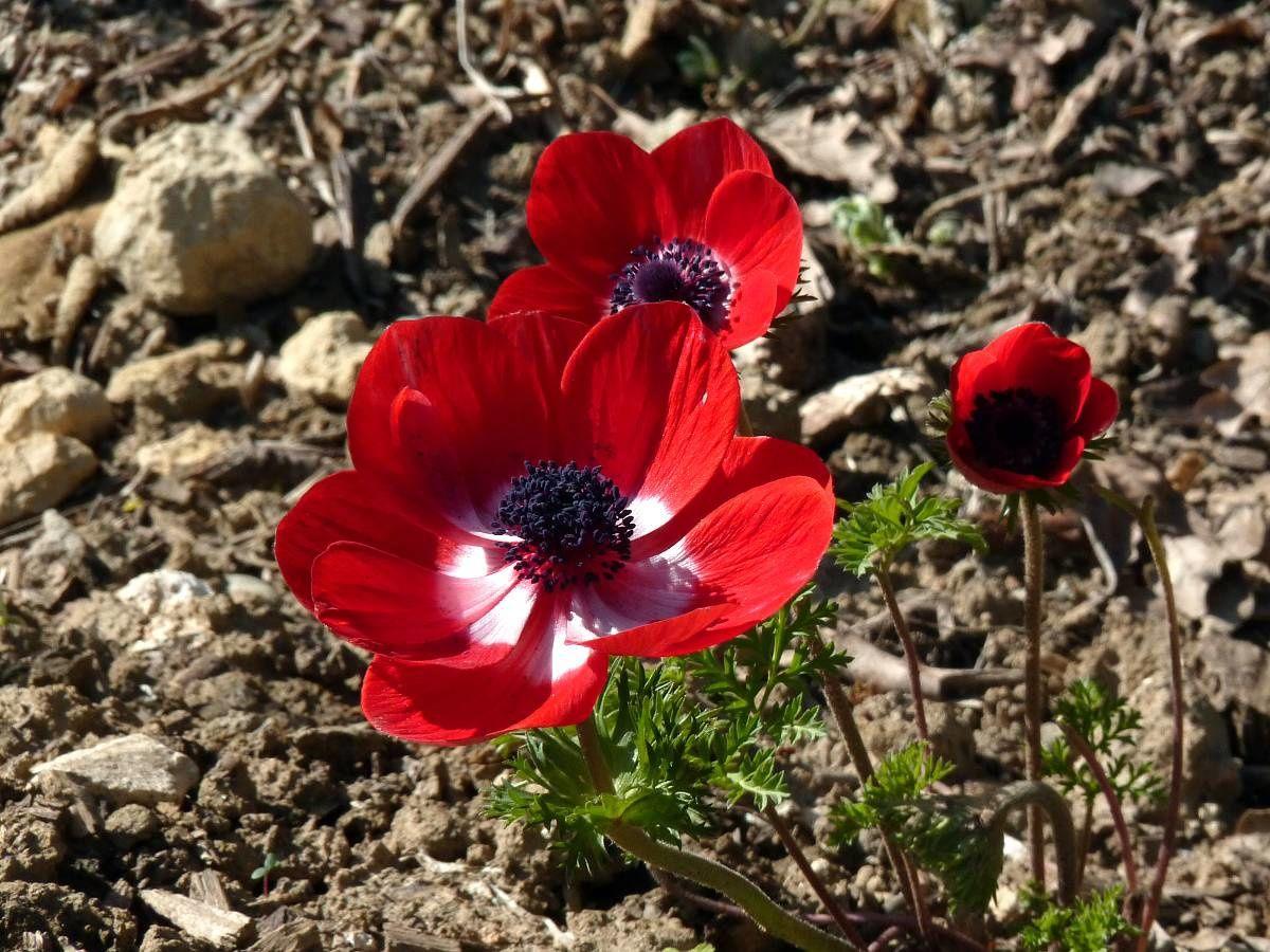 Au jardin de Marithé semaine 12/2012