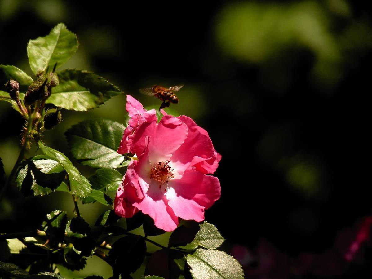 Au jardin de Marithé semaine 24/2012