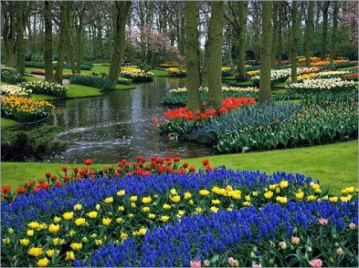 tulipes et jardin de keukenhof le blog de la famille storcka. Black Bedroom Furniture Sets. Home Design Ideas