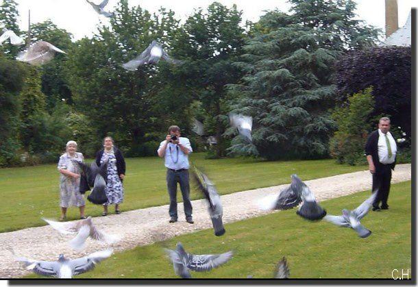 envol-pigeons.jpg