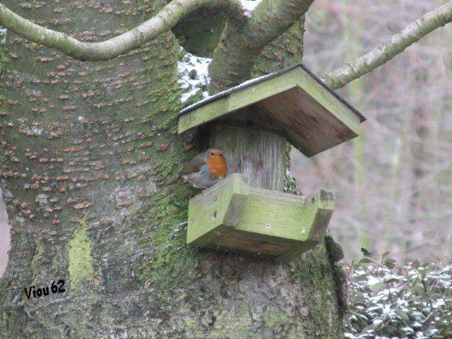 Album les oiseaux du jardin 2012 13 viou62 for Les oiseaux du jardin