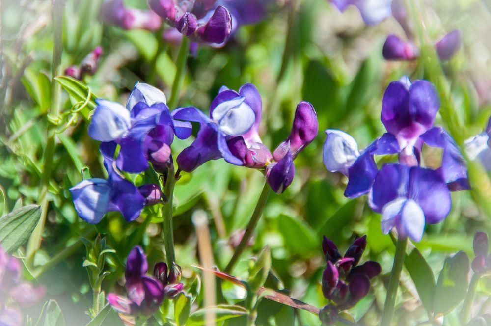Faune et Flore de patagonie
