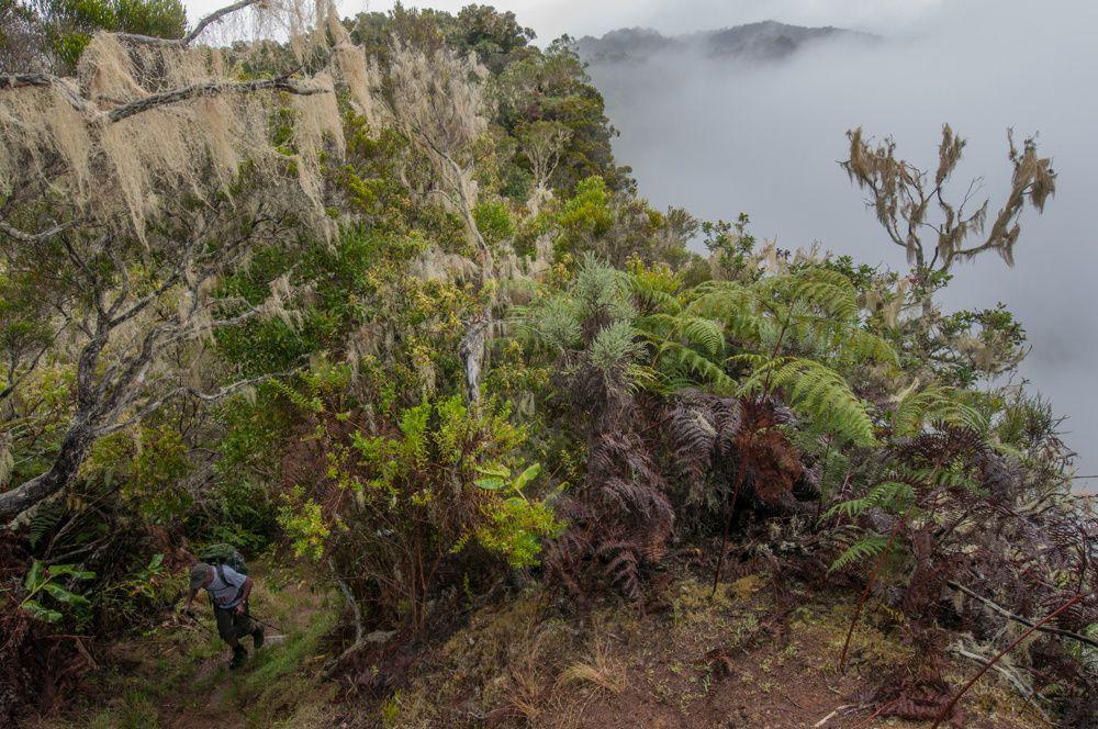 Ile de la Réunion GR R2 Etape 2 De la plaine des chicots à dos d'Âne
