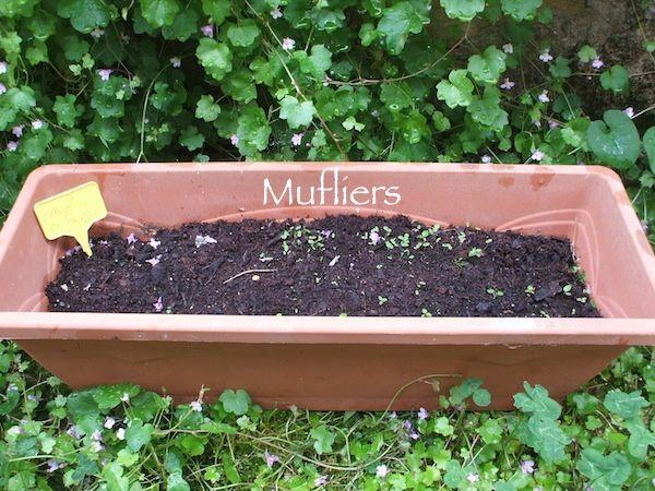 mufliers.JPG