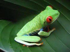 vert grenouille