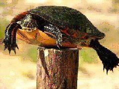 piquet-tortue.jpg