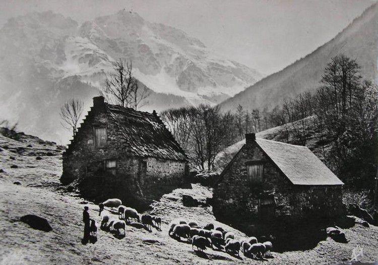 Bergers pyreneens en 1950