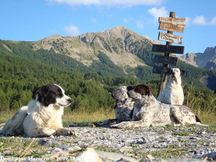 Htes Alpes CROTS 2008 (137)