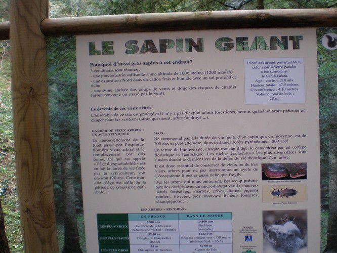 affiche-le-sapin-g-ant.jpg