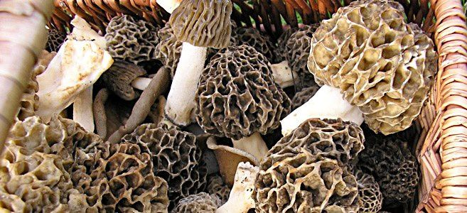 Balade aux champignons 031