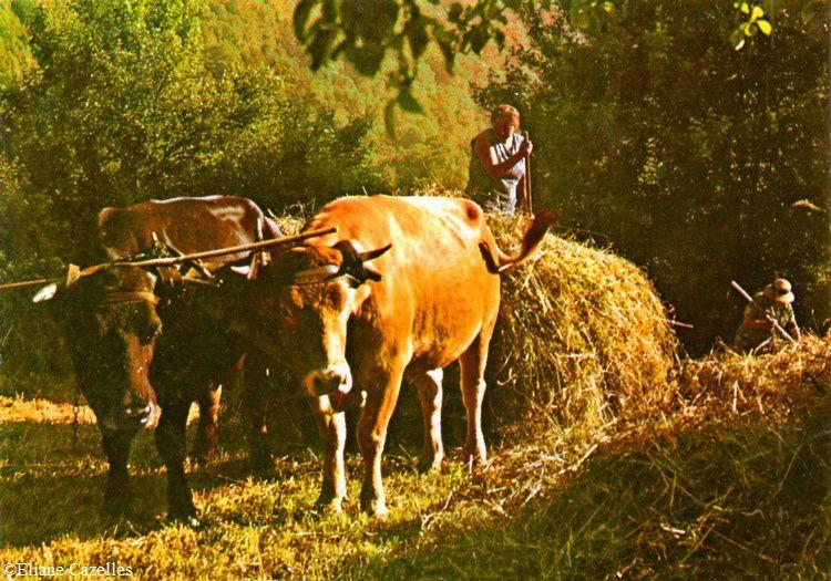 Pays de Sault les vaches=tracteur 01
