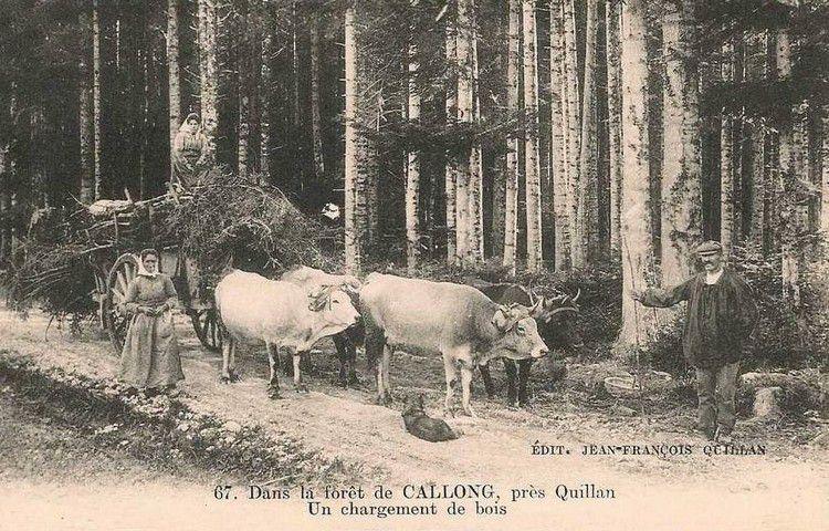 quillan forêt de callong en 1900