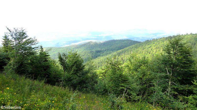 95 En descendant - vue sur la forêt d'Aspre et le