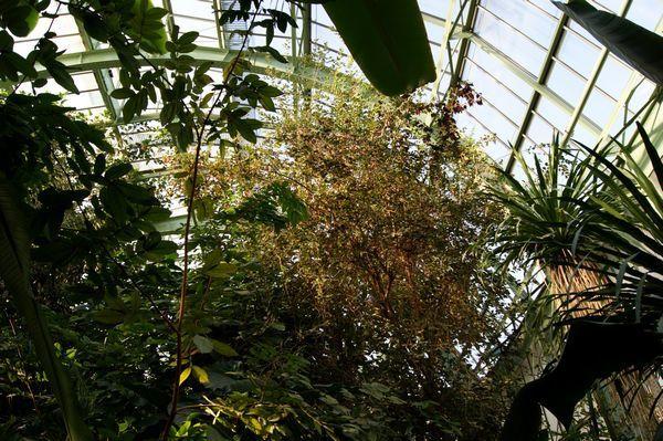 Serre Tropicale Jardin des Plantes PARIS