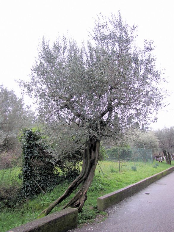 Italie-8008.JPG