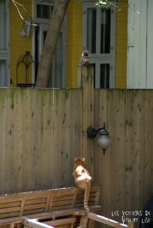blog pvt canada montreal voyage tour du monde couple chat ecureuil jardin chasse