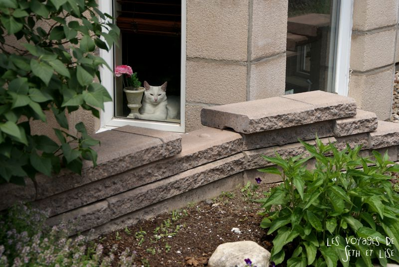 blog voyage pvt canada couple montreal tour du monde rue plateau chat blanc white cat fenetre