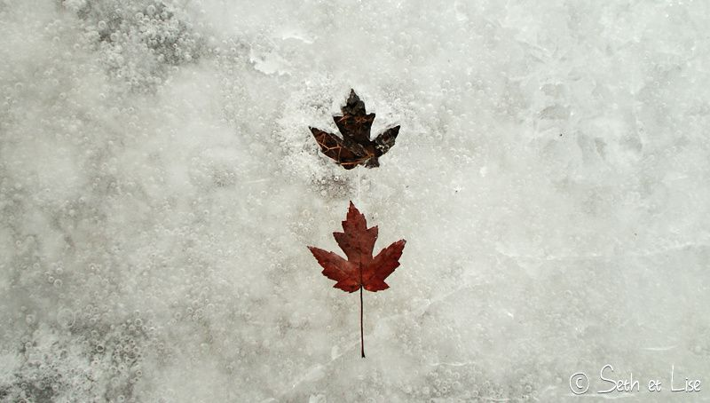 blog pvt canada montreal hiver glace printemps blanc photographie seth lise feuille erable rouge