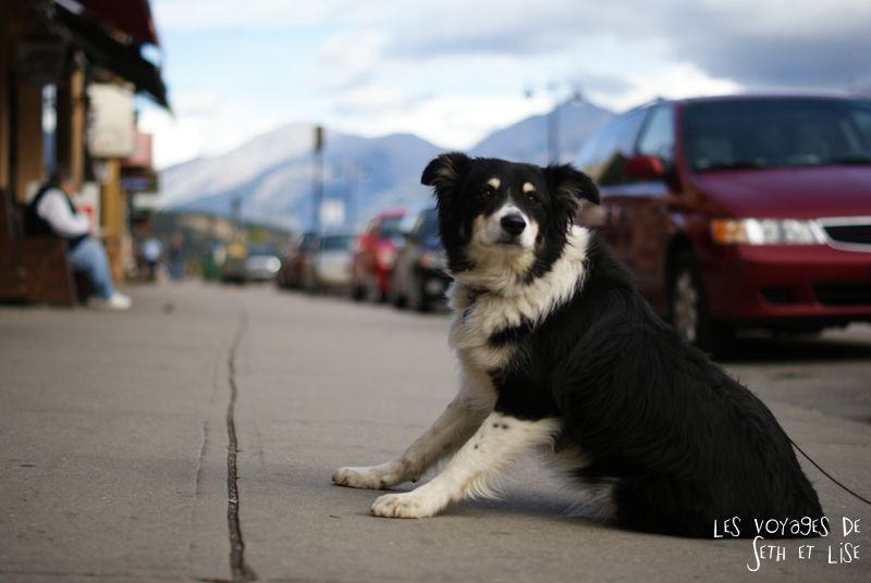 blog pvt pvtiste voyage photo photographie couple tour du monde canada japser rockies alberta rocky mountain vintage ville urban dog chien