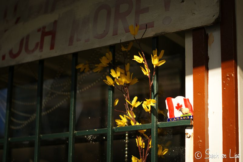 blog canada photo voyage pvt calgary flag drapeau