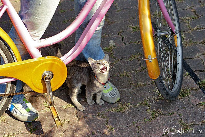catbike.jpg