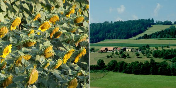 blog voyage australie whv sunflower landscape travel austria