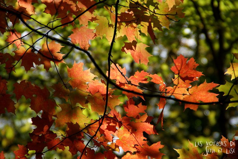 blog pvt canada pvtiste quebec mont orford parc photgraphie voyage couple ete indien summer indian couleur colors nature tour du monde feuilles macro leaf
