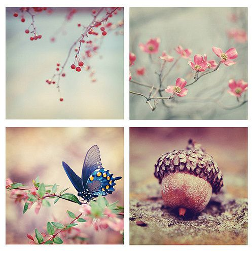 pretty-photo-pink-vintage-montage-butterfly-cf7523de6db0d44.jpg