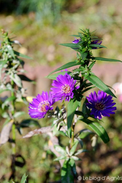 Aster(2012 10) 0107