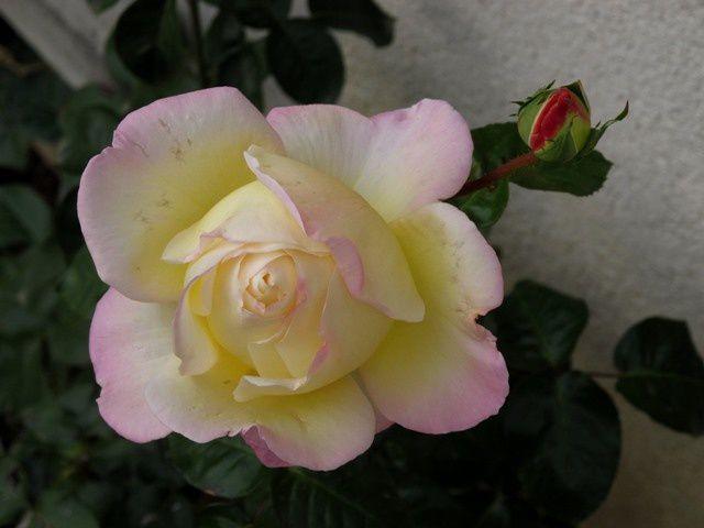 (2010 10) 0127