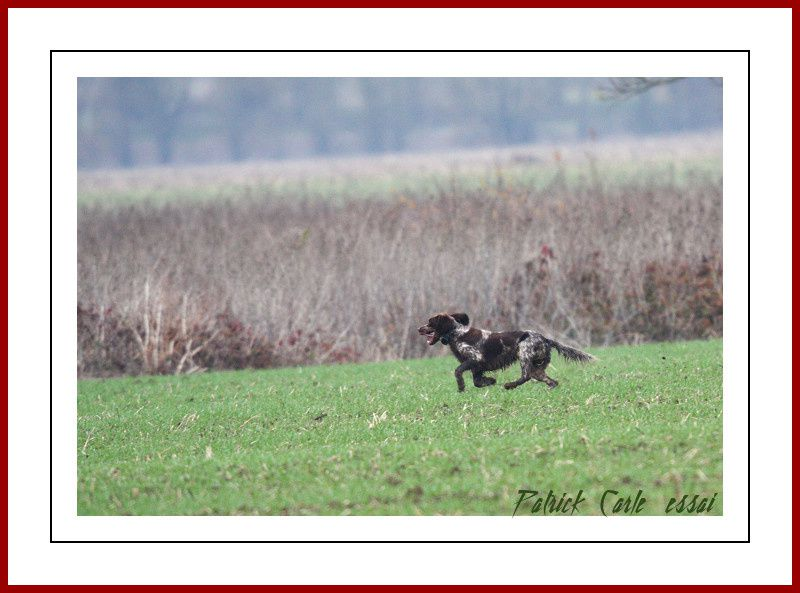 chien EOS450D+Sigma500f4.5 079-border