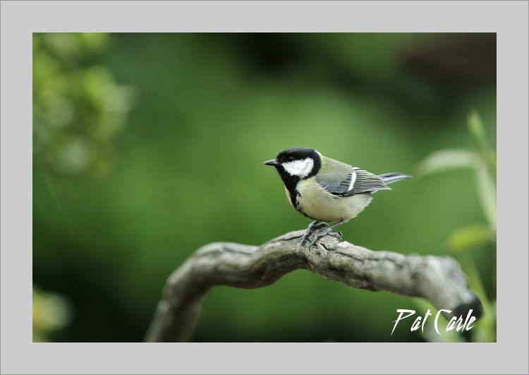 oiseaux jardin 109 - Copie-border