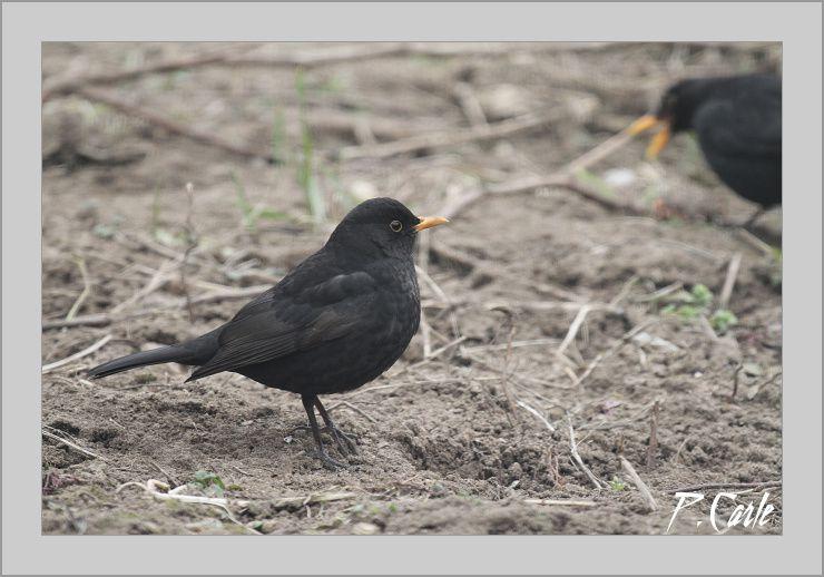 oiseaux-jardin-souris-006-border.jpg