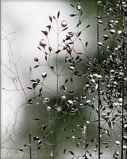 Space Grass - Olga Denisova