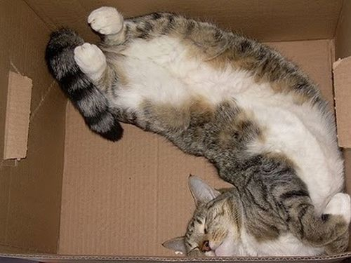 how_sleep_in_box--8-.jpg