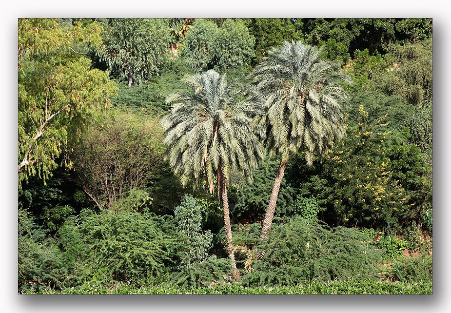Rive-du-Niger-a-Niamey-blog.jpg