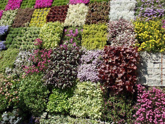 Bolzen-damier-en-fleurs.JPG