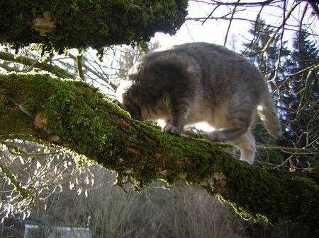 0329 arbre chat (1)
