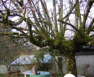 0329 arbre chat