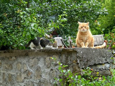 062612 3cats (1)
