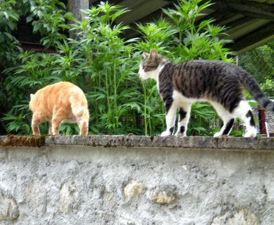 062612 3cats (2)