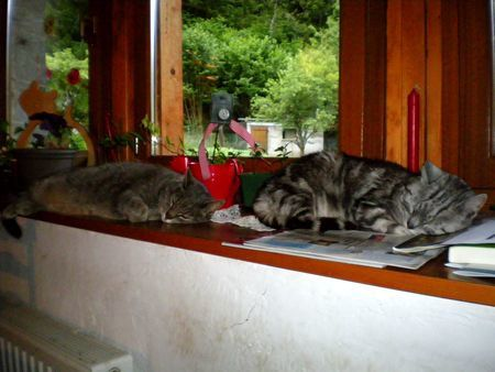 062612 3cats (6)