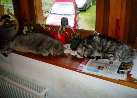 062612 3cats (7)