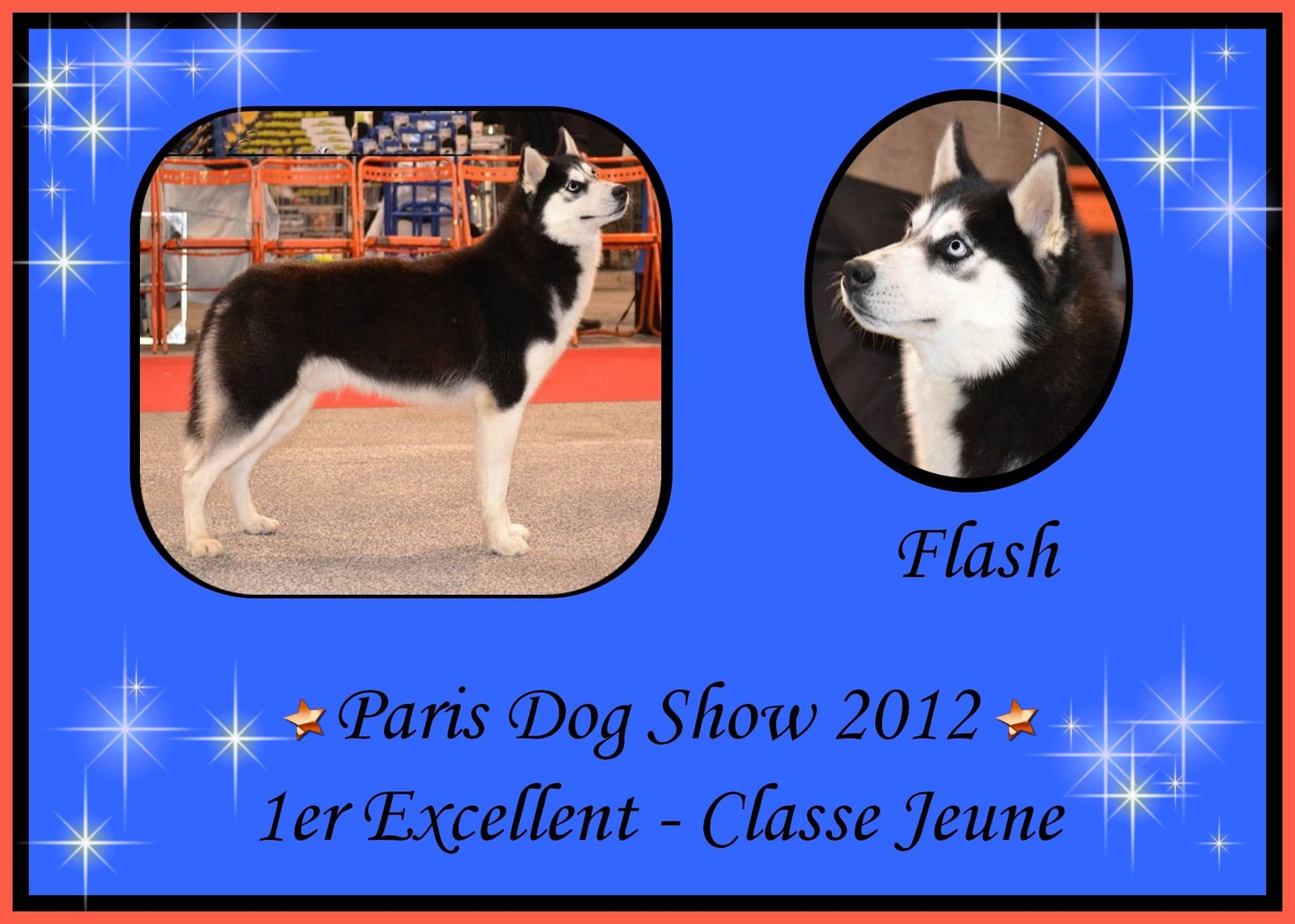 Canine Expo Dog Show
