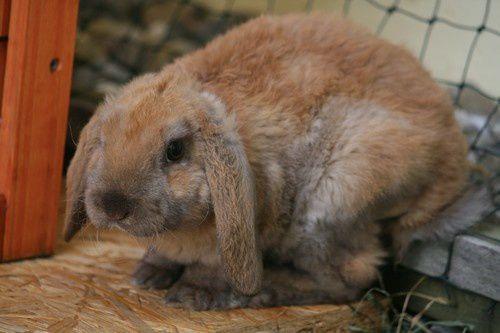 lapins-arrive-Toby-2.jpg