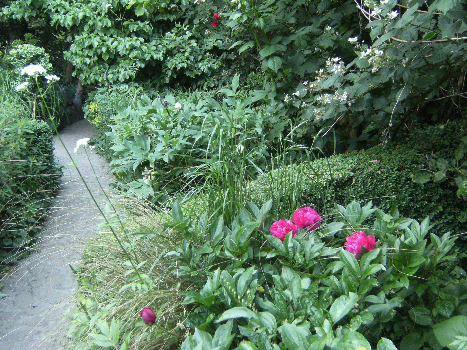 Juin parfume le jardin le mois des roses et des pivoines for Plante arbustive fleurie