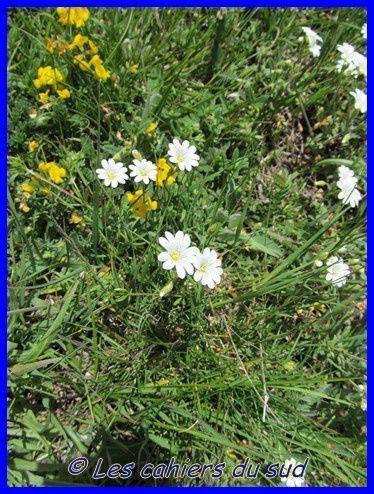 devoluy-boucle-de-souchiere-06--2014 0527 [640x480]