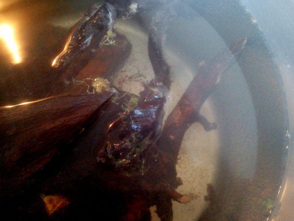 Batterie betta/crevettes/killi 6x20l sur vase de catappa et autre Image-copie-6