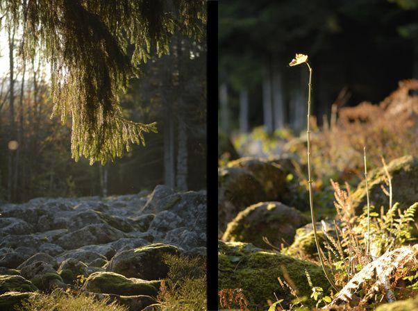 barbey seroux champ de roches